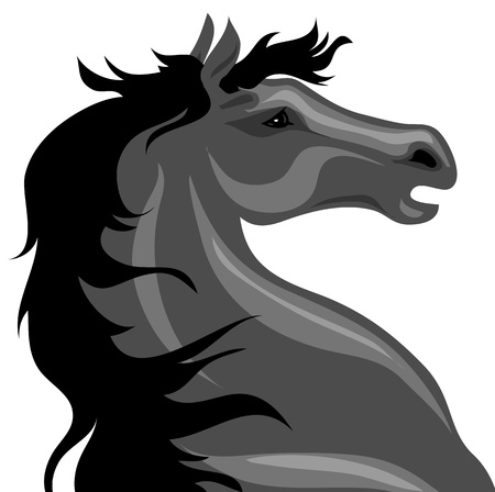 head of a black horse on a white background