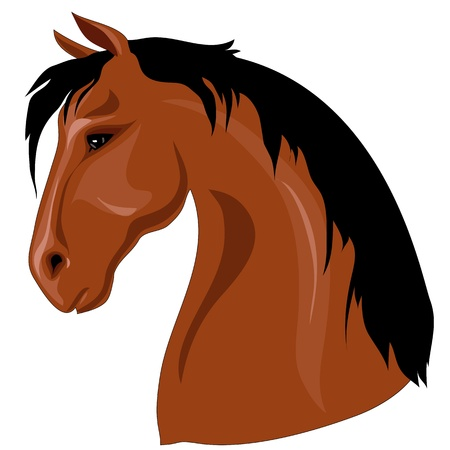 Head of brown horse with black mane against a white background