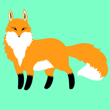 fluffy red fox on a blue background Illustration
