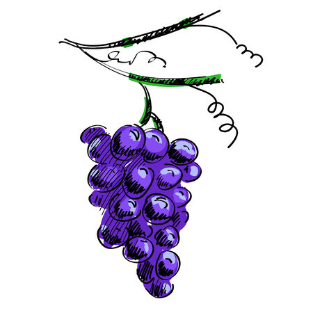 illustration of a branch of grapes isolated