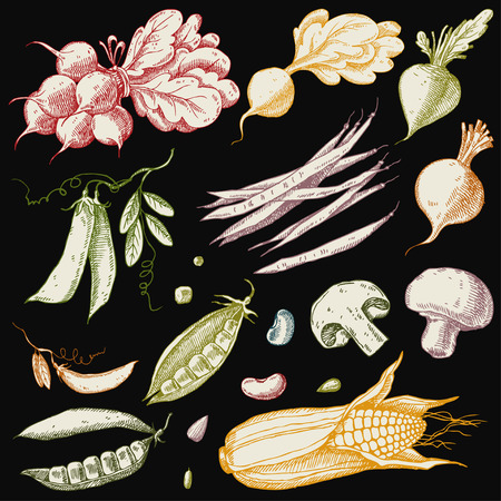 Set of hand drawn vegetables. Corn, peas, beans, beets, radishes and mushrooms.