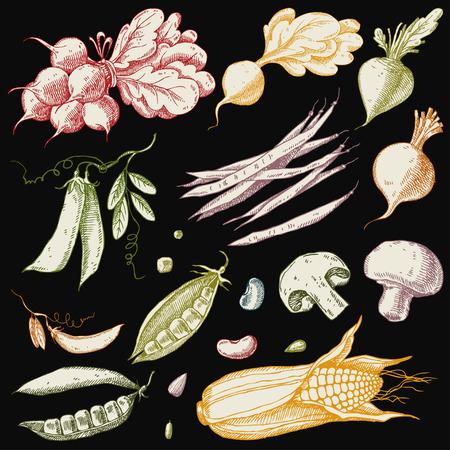 Set van hand getrokken groenten. Maïs, erwten, bonen, bieten, radijs en champignons. Stock Illustratie
