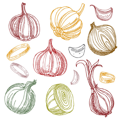 Hand drawn garlic and onions. Vegetables. Doodle set. Çizim