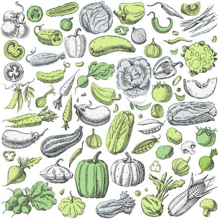 Set of various hand drawn vegetables vector illustration