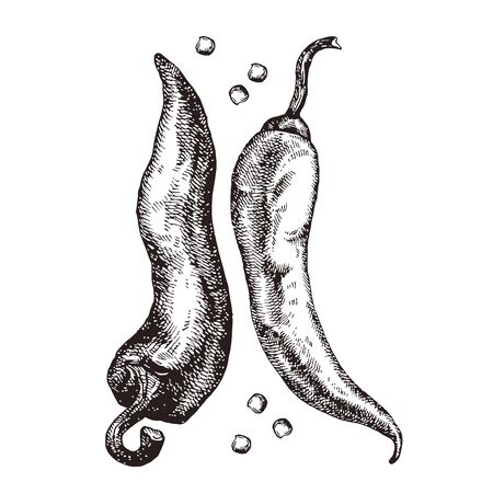 Set of hand drawn chili pepper. Vector illustration isolated on white