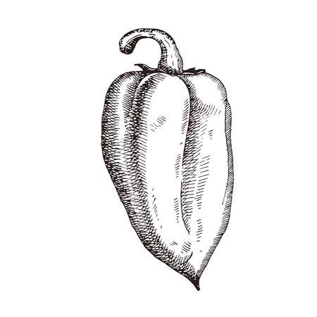 Paprika. Hand drawn pepper sketch. Vector illustration for vegan products, brochures, banner, restaurant menu, farmers market and organic food store