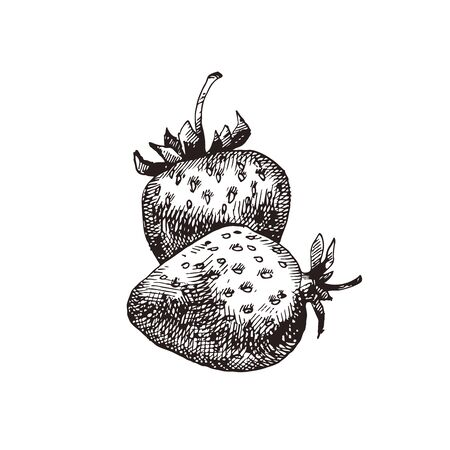 Strawberry hand drawn vector illustration Illustration