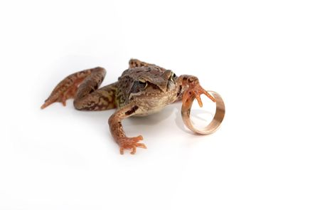 The frog holds a wedding ring photo