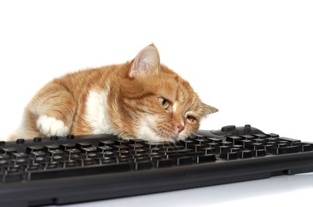 lays: The red cat lays on the keyboard
