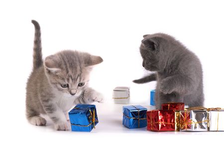 The kittens plays with gifts photo