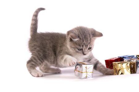 The kitten plays with gifts photo