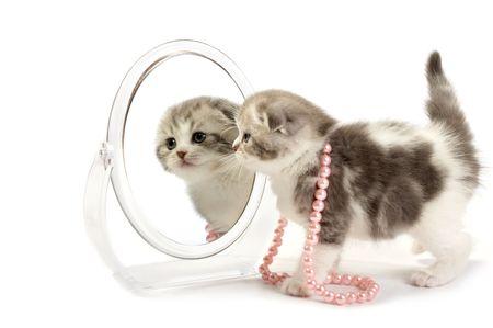admire: The kitten looks in a mirror