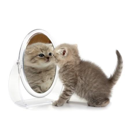 bewonderen: De kitten kijkt in de spiegel Stockfoto