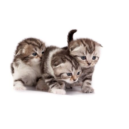 The kittens plays on a white background Stock Photo - 3987197