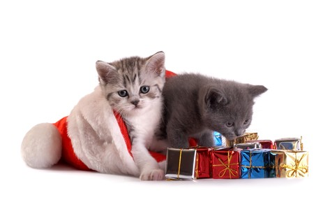 new year cat: Kittens play with gifts