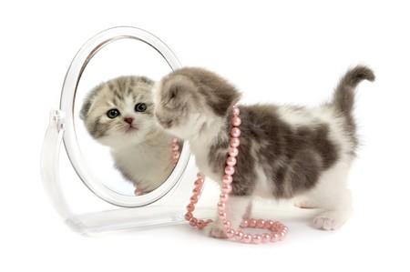 The kitten looks in a mirror