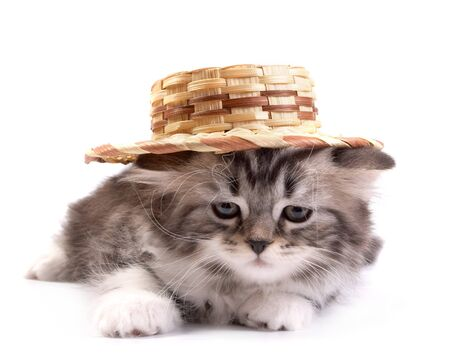 The kitten plays on a white background Stock Photo - 4301857