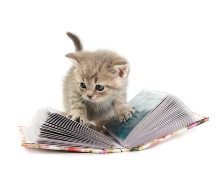 The kitten plays with the book photo