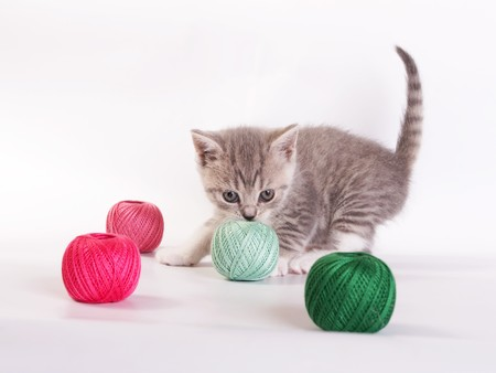 The kitten plays on a white background photo