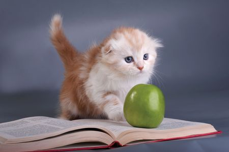 Kitten, the book and a green apple  photo