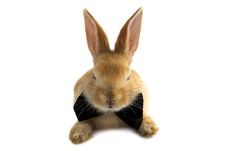 The mustachioed rabbit bow tie on a white background.