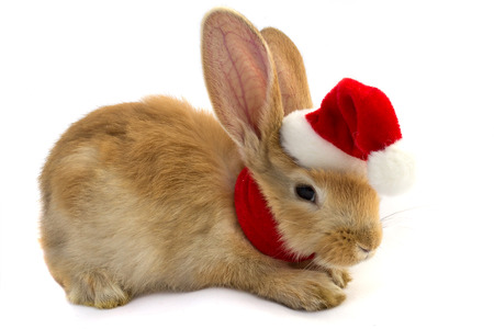 Rabbit scarf in esapce Santa Claus on a white background .