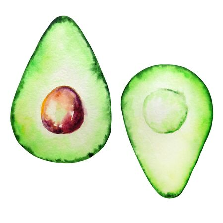 watercolor avocado exotic tropical fruit two halves green with brown stone