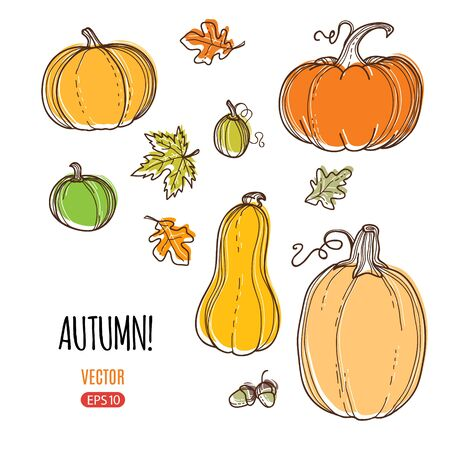 Autumn harvest vector hand drawing style illustration. Template for web, print industry, brand advertising. Illustration