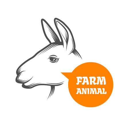 alpaca animal: Farm animal - lama or alpaca. Vector illustration.