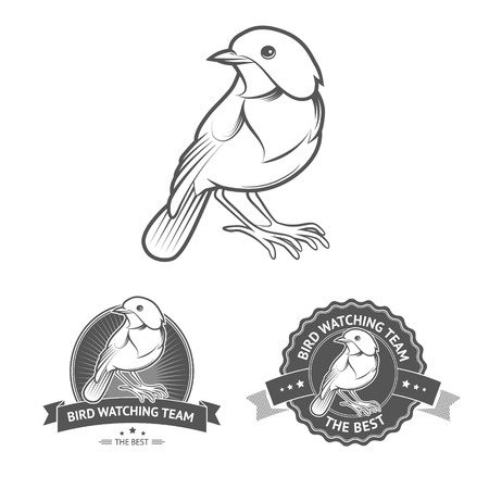 naturalist: Bird watching badges and labels in vintage style. Editable vector illustration of watching birds logo.
