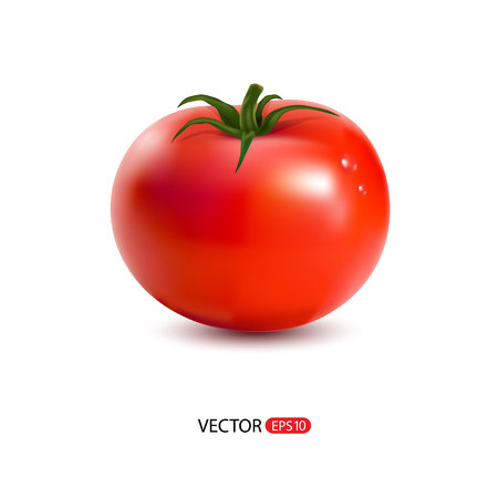 Vector illustration of red  big fresh tomato isolated on white background. Vettoriali