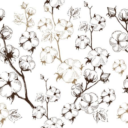 Orgánica tallos de las plantas de algodón en el fondo blanco, plantilla patrón transparente. Ilustración del vector, estilo de dibujar a mano moderna.