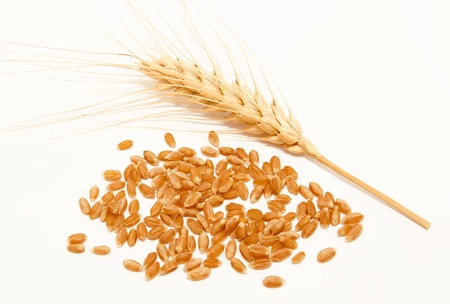 harina: Espigas de trigo y semillas aisladas sobre un fondo blanco