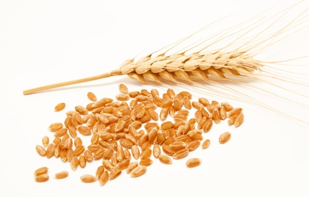 Wheat ears and seed isolated on a white background