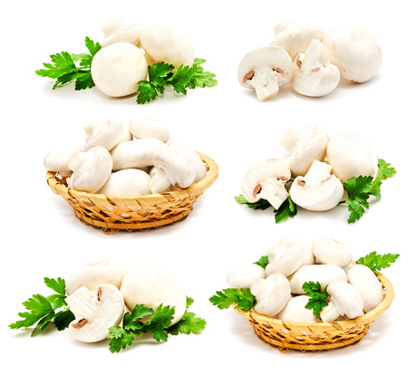 agaricus: Collection of champignon mushroom white agaricus isolated on a white Stock Photo