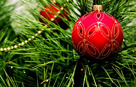 christmas tree ball: Red christmas ball hanging on fir tree Stock Photo