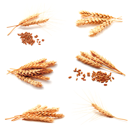 Collection of photos wheat ears and seed isolated on a white background Stock Photo