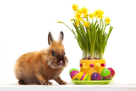 Funny little rabbit with easter eggs  Greeting card  Spring bunny  Isolated on white background photo