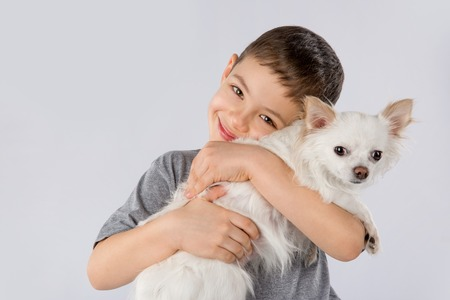 Little boy white Chihuahua dog isolated on white background. Kids pet friendship