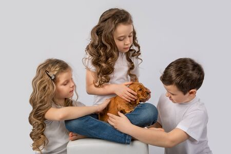 Children with red puppy isolated on white background. Kid Pet Friendship