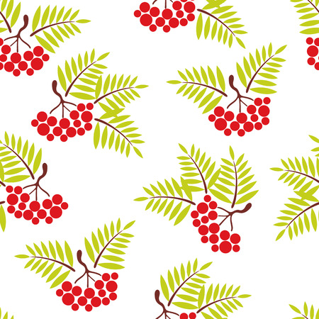 sorb: seamless background. Bunches of Rowan on white background Illustration