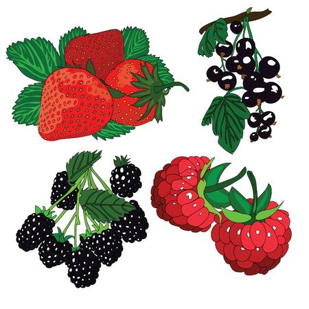 dewberry: Set of berries