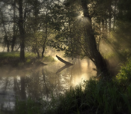 fog over the river in the forest at dawn Stock Photo - 9809665