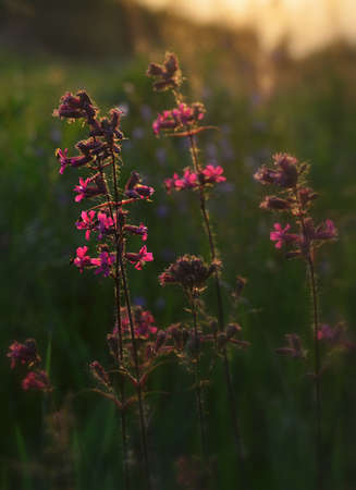 the setting sun: flowers in the setting sun