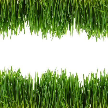 The green grass isolated on white  photo