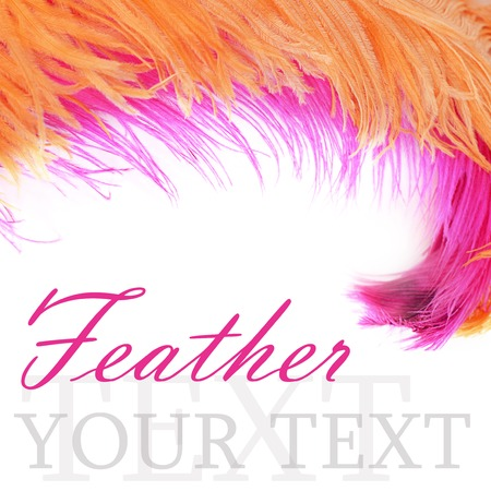 Pink beautiful feather isolated on white background