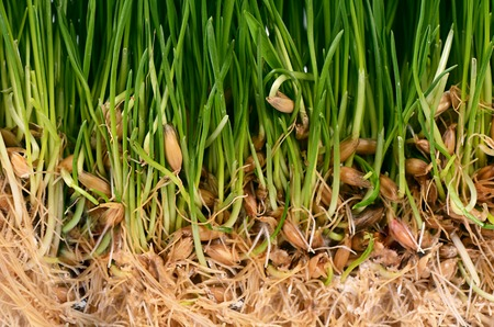 The green grass with soil close up photo