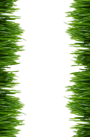 The green grass isolated on white background photo