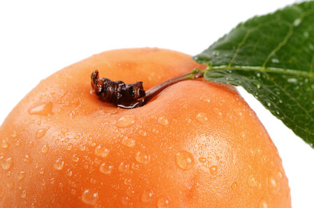 The fresh apricot with a leaf isolated photo