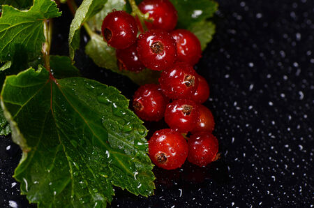 The red fresh currant close up. Macro photo